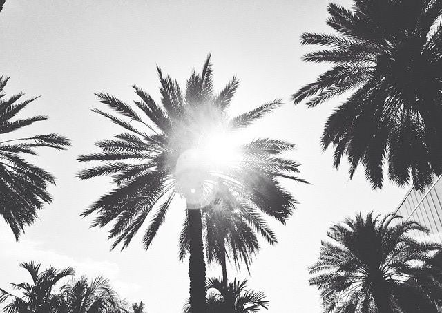 Palm Trees In The Sun Photography Black White