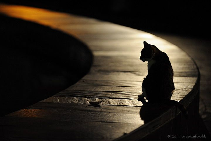 lonelyFunny Kitty, Hong Kong, American Proverbs, Silhouettes, Leopards, Photos Cat, Black Cat, Animal, Native American