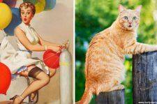 Gatos que arrasaram no estilo pin-up