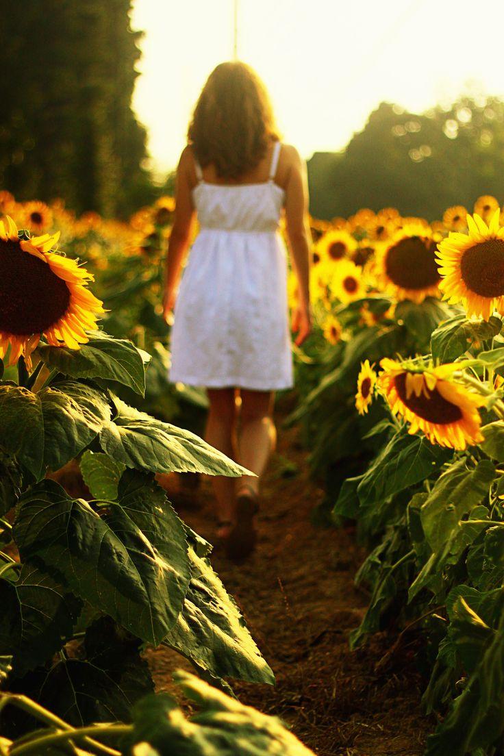 walking in sunflower fields