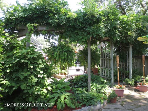 Support for Overhead Climbing Vines - This type of structure is a great idea if you want more privacy but don't wish to have a tall fence or wait for trees to grow.