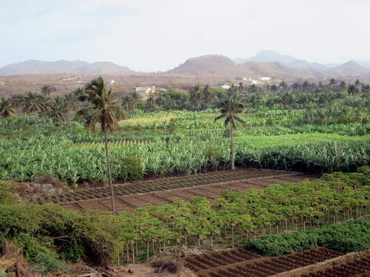 The valley adjacent to the small town of Achada Fazenda on the east coast of Santiago Island, Cape Verde, is rich agriculturally.