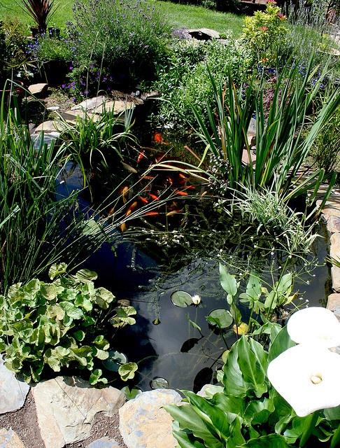 My garden pond #1 | Flickr - Photo Sharing!
