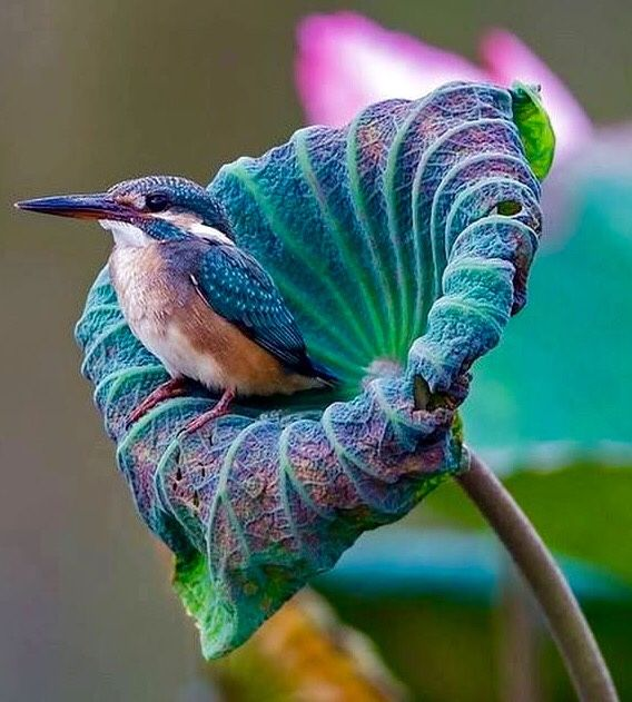 A brilliant image, in cool violets and blues, of a hummingbird, perched after drinking from an exotic, delicious-looking tropical flower.