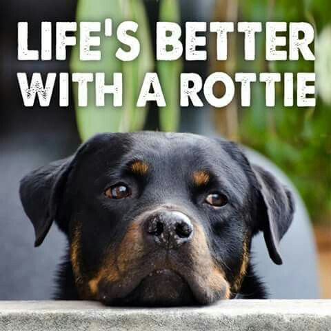 I dont get why people hate rotties because they are actually so sweet and friendly its just the ones who were trained to be violent by their owners so its actually the owners who are evil