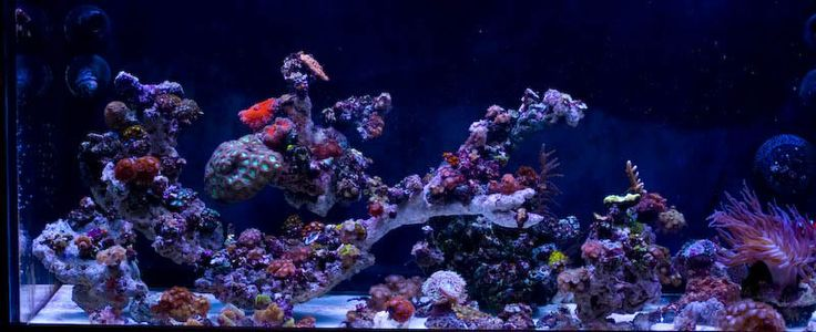 Reef Tank Aquascape Ideas that tank yet though anyway here is the ...