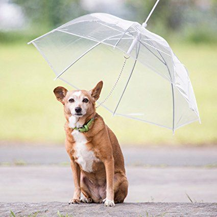 Transparenter Regenschirm für Hunde Welpen & Haustiere Regenmantel Petumbrella 70cm