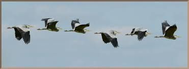Image result for heron flying
