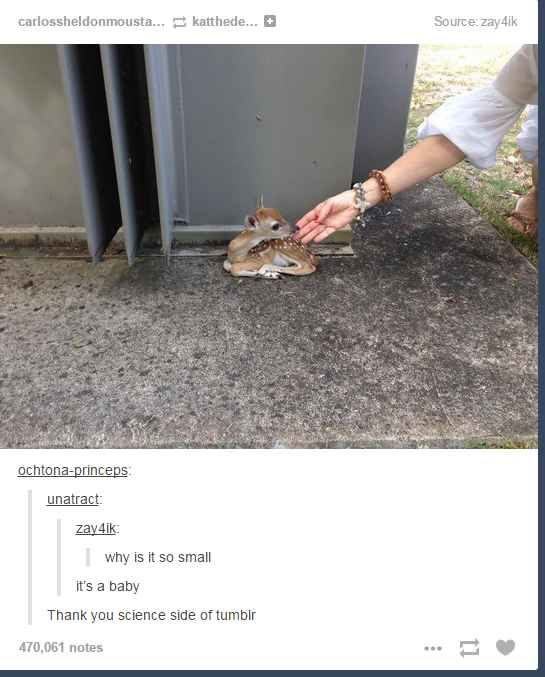 23 Of The Cutest Things That Have Ever Happened On Tumblr