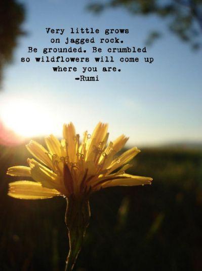 Rumi Quotes # rumi #quotes