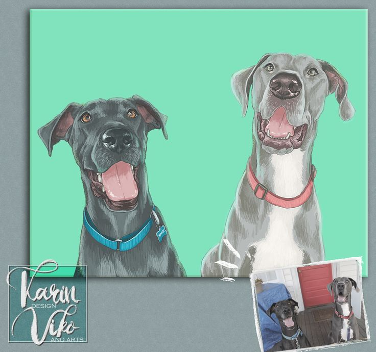 two dogs portrait teal mint background