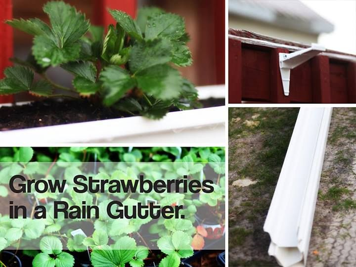 How To Build A Rain Gutter Stand To Grow Strawberries