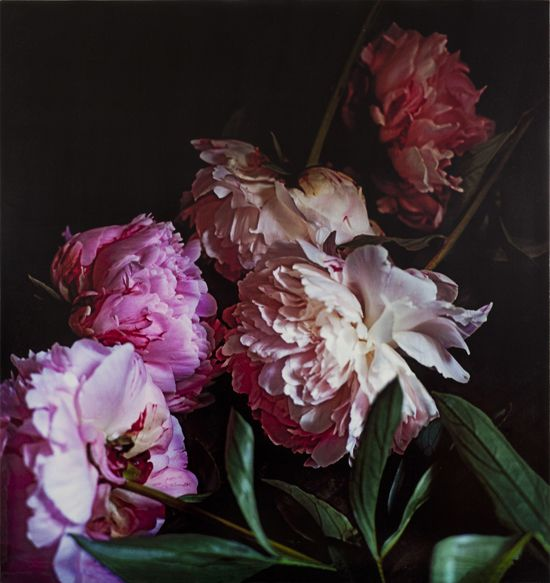 Craigie Horsfield - 'Five Peonies. via Chiatamone, Naples. May 2010', 2013, Gesso, ink and wax on oak board, 100 x 92 x 3.3 cm