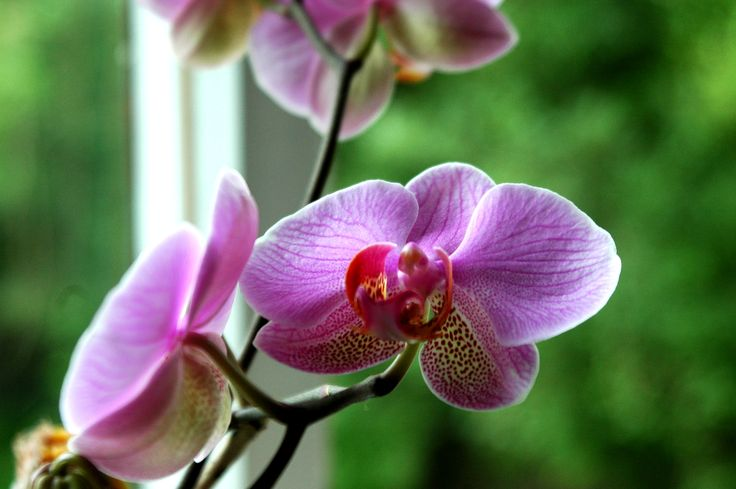 Get beautiful orchids with PRO-MIX Orchid Mix.