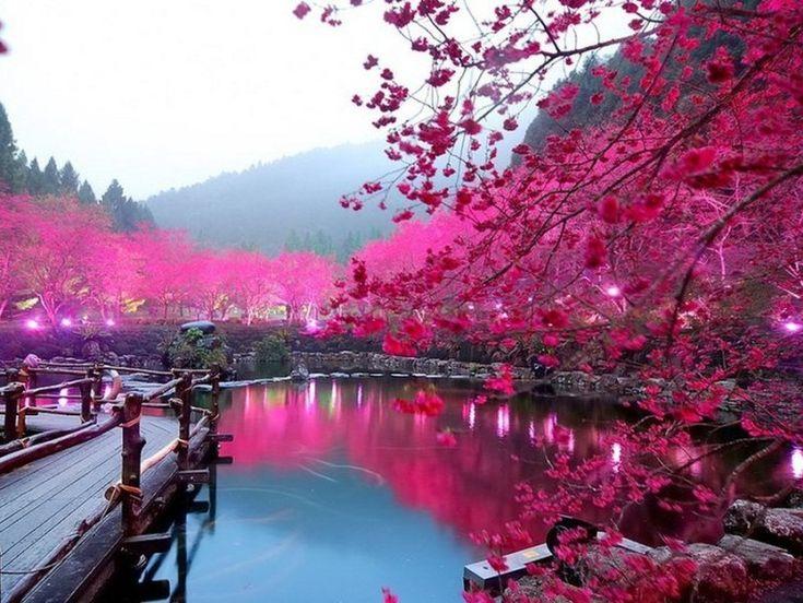 most beautiful places taiwan | Фото дня: Цветение сакуры, Тайвань