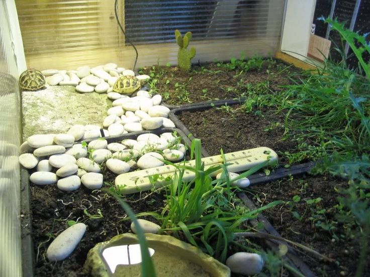 17 best images about indoor tortoise habitats for tootsie for Tortoise table org uk