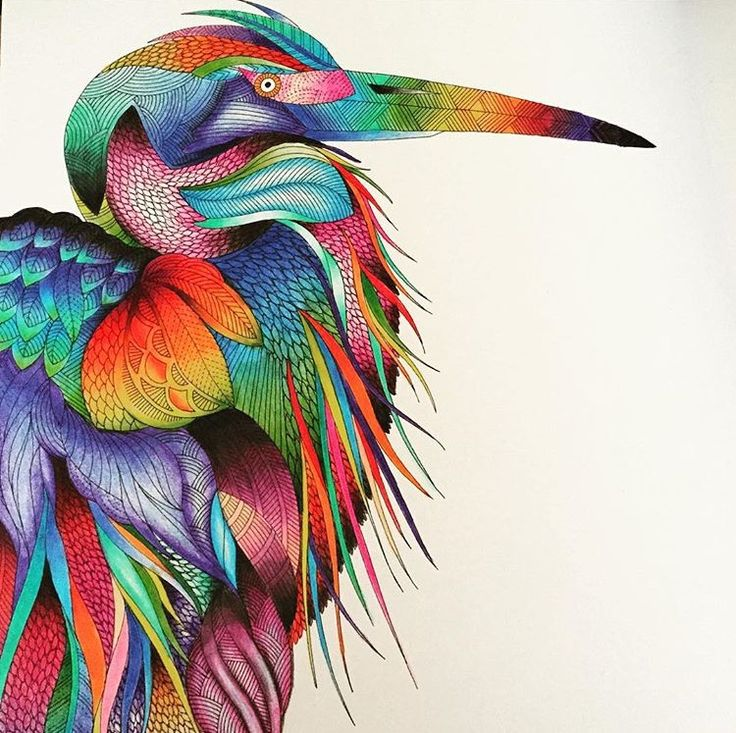 This Is Beautiful Completed From The Millie Marotta Animal Kingdom Colouring Book