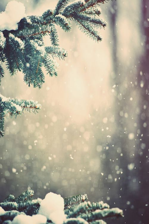 #PANDORAloves this wonderful photo of falling snow covering the spruces.