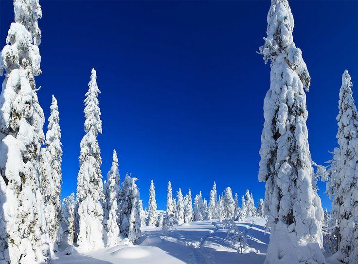 Koli National Park North Karelia Finland