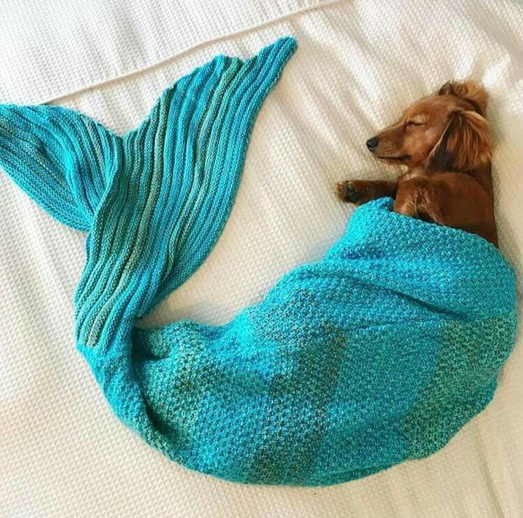 Make one special photo charms for your pets, 100% compatible with your Pandora bracelets.  Must be Sophie...her mugger thinks she is a mermaid!!  Mpp