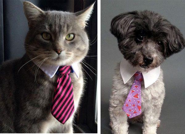 Corbatas para perros y gatos con un look arreglado pero casual »  No Puedo Creer