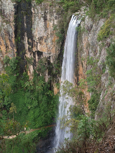 Purlingbrook Falls in Springbrook National Park tumbles 109m in a single cascade off the Springbrook escarptment.
