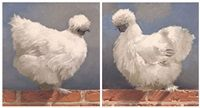 Silkie Hens a pair by Neil Rodger