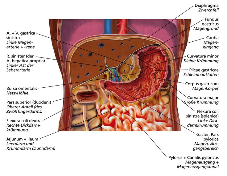 Luxury Anatomy Of Intercourse In Humans Pattern Anatomy And