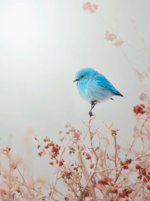 Sweet! A tiny blue bird perched on the very top of a small branch. Bird watching when older