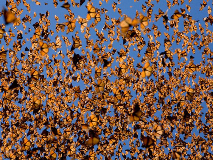 See the monarch migration in Mexico! I've seen it. It's fabulous!