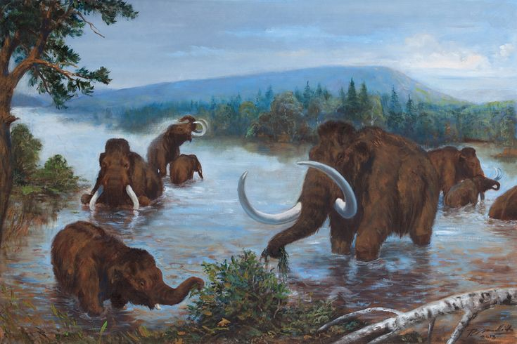Mammuthus primigenius by Petr Modlitba