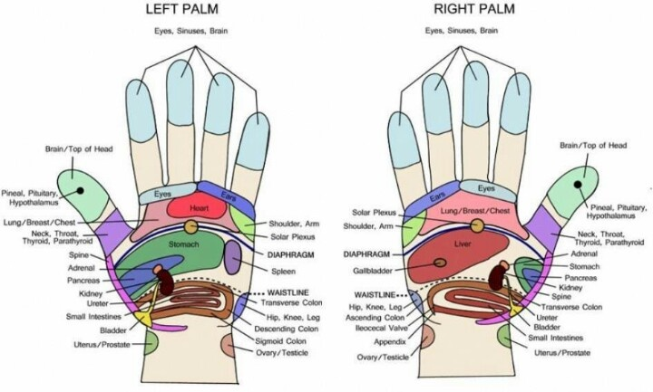 Does The Left Ring Finger Vein Connected To Your Heart