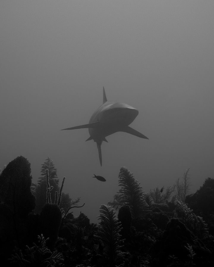 Magnificent Underwater Photography by Jacques de Vos I'm terrified of places where I might get vulnerable and exposed to its dangers. My best guess is that underwater I might get devoured by a giant shark or dragged to the bottom of ocean by something with tentacles. But seeing these underwater pictures make my thoughts get lighter and even merrier.
