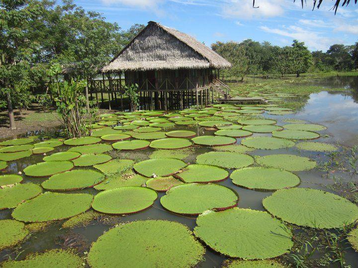 río Amazonas  Colombia