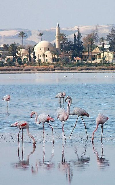 Salt Lake, Larnaca, Cyprus