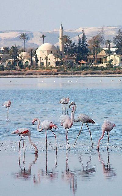 Salt Lake, Larnaca, Cyprus