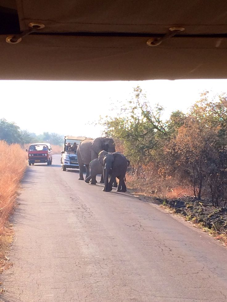 Elephants on the road! Pilanesburg game reserve - South Africa. This is exactly what happened to us, but there was 10 elephants in the road!