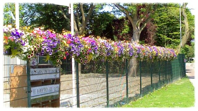 hek vol met bloemen bloemen tuin
