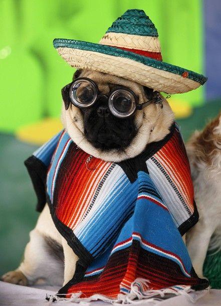 22 Pugs Who Dress to Impress - Barkpost - Blog From the Pups at BarkBox  Pancho Villa! lol