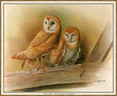 'Barn Owls' by Fenwick Lansdowne