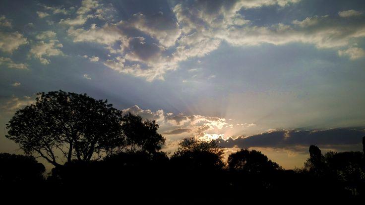 Lion Park at sunset, Johannesburg, South Africa