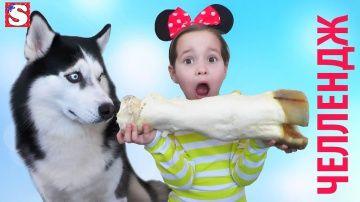 Смешной Челлендж с Хаски Интуиция Игра видео для детей Taste Test Challenge FOR KIDS! Food challenge http://video-kid.com/11140-smeshnoi-chellendzh-s-haski-intuicija-igra-video-dlja-detei-taste-test-challenge-for-kids-food.html  Все Видео Канала Little Miss Sofia:https://www.youtube.com/channel/UC3p6RnGpU0QQ_H7eYbnH2AA/videosTOYS FOR KIDS! Привет всем! Новая серия. Хаски Фрэнк выбирает продукты, а нам нужно угадать ,что он выберет. На канале Маленькая мисс, сегодня мы и наши зрители…