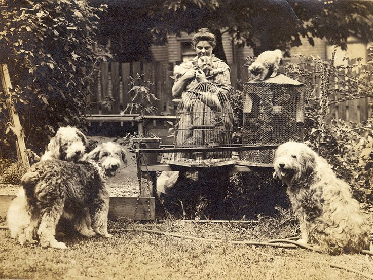 """Emily Carr ran a boarding house from 1913 through the 1920s, recording her experiences as a landlady in her book """"The House of All Sorts"""" (1944). Carr with her pets, in the garden of her home on Simcoe Street in Victoria, 1918."""