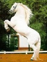 Resultado de imagen para caballo frison en venta