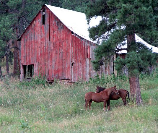 Colorado Barn And Horses Near Evergreen CO