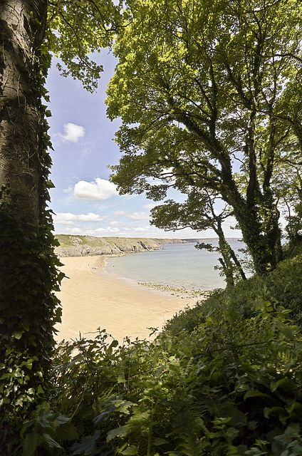Barafundle Bay (NT) Pembrokeshire, Wales