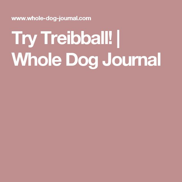 Try Treibball! | Whole Dog Journal