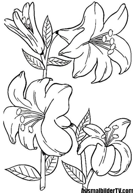 Blumen Malvorlage Embroidery Patterns Malvorlagen Malvorlagen