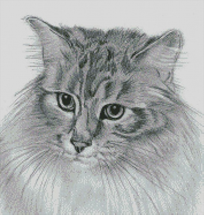 Maine Coone Cat, Counted Cross Stitch Chart - by Cross-Stitch-Crazy available in 14 & 18 count available at ebay right now. Click on Visit (above right.)