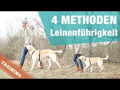 4 METHODEN   Leinenführigkeit   Hund BEI FUß Training Hundeerziehung walk leash pulling heel - YouTube